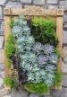 Norfolk Succulents