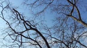 Trees in Norfolk