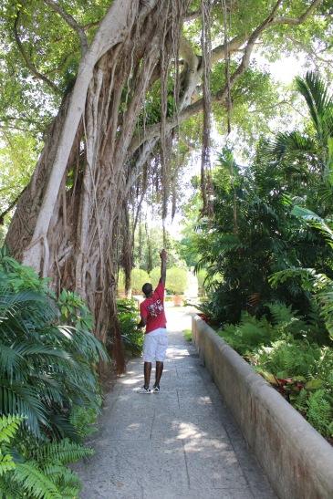 Large Vizcaya Tree