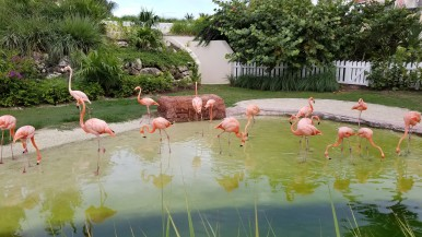 Grand Hyatt Baha Mar Flamingos