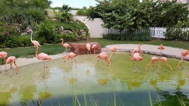 Grand Hyatt Baha Mar Flamingos