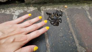 Queens Staircase Spider